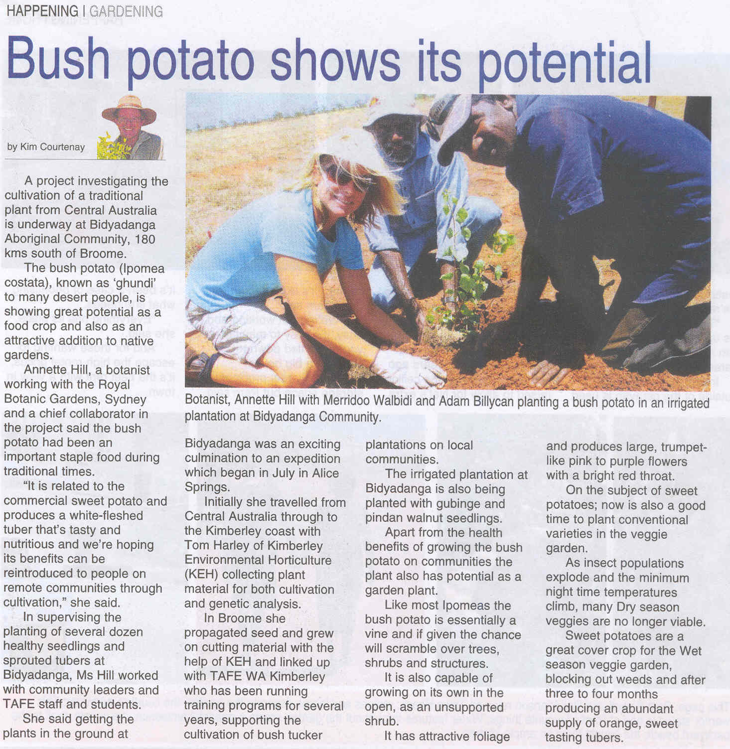 Bush Potato Potential