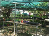 Nuwal Nursery - a busy work place during the week and popular cool spot for Saturday shoppers...